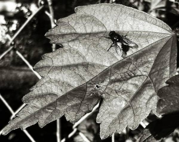 Photograph - A Fly by Robert Knight
