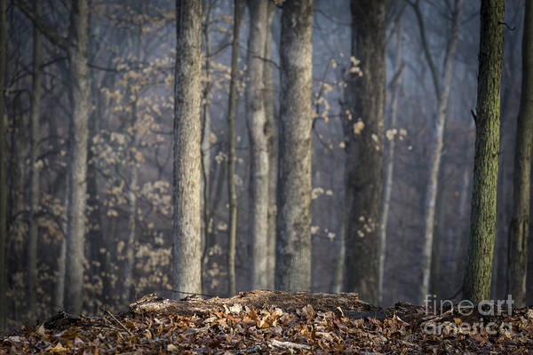 Photograph - A Foggy Morning by Andrea Silies