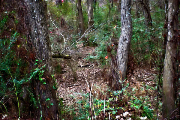Photograph - A Forest Clearing by Gina O'Brien
