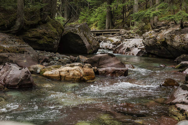 Photograph - A Forest Fit For Fairies - Glacier Np by Belinda Greb