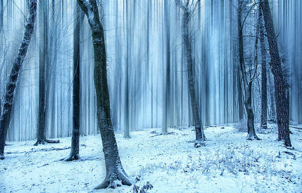 A Forest In Winter Art Print