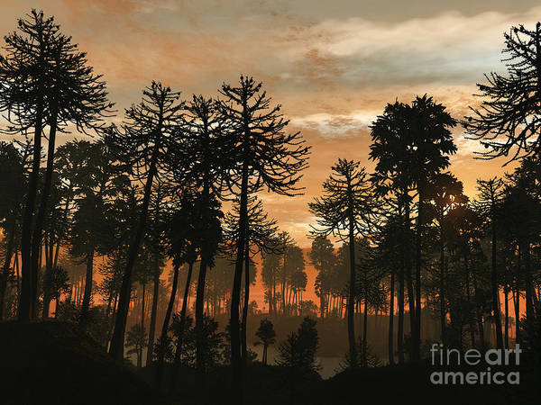 Paleobotany Digital Art - A Forest Of Cordaites And Araucaria by Walter Myers
