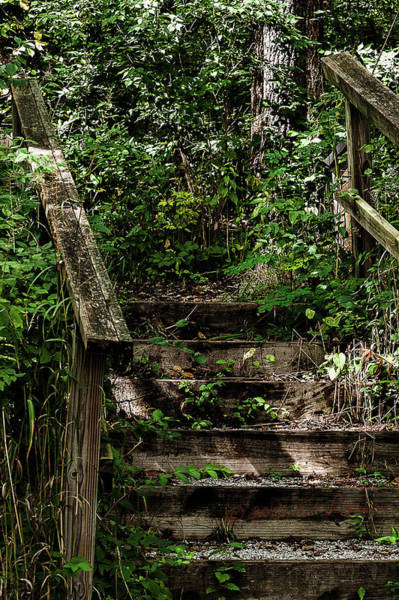 Photograph - A Forest Wooden Stairway by Edward Peterson