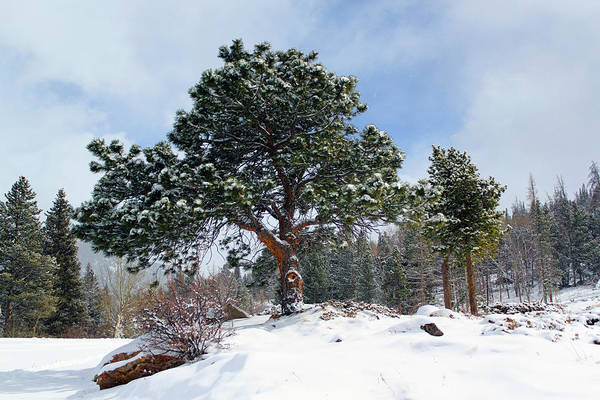 Photograph - A Fresh Blanket Of Snow by Shane Bechler
