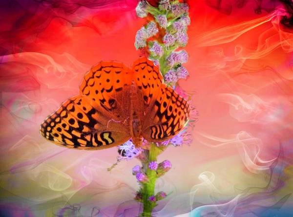 Digital Art -  A Fritillary Butterfly. by Rusty R Smith