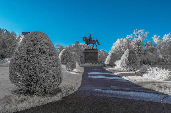 Photograph - A Frosted Boston Public Garden by Bryan Xavier