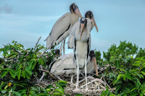Photograph - A Full Nest by Wolfgang Stocker