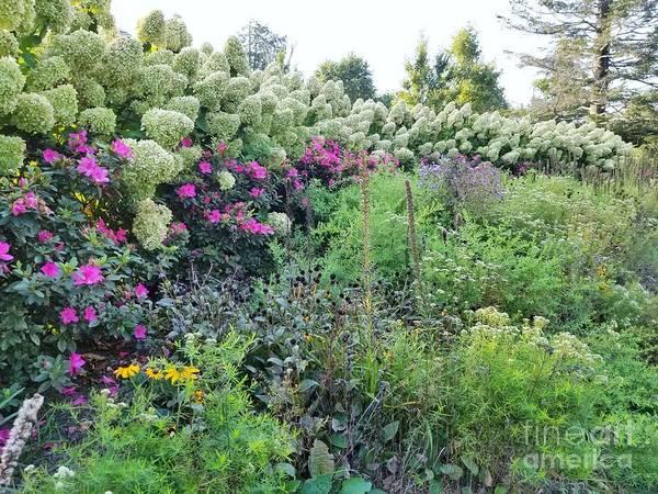 Photograph - A Garden Story by Rachel Hannah