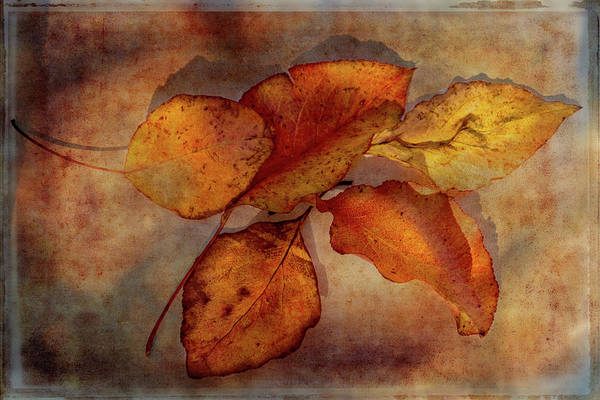 Wall Art - Digital Art - A Gathering Of Leaves by Terry Davis