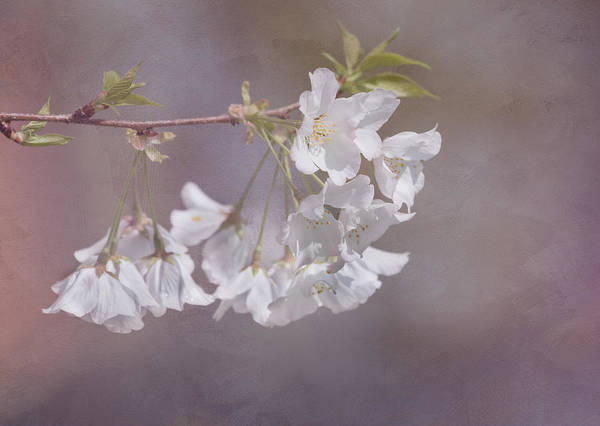 Photograph - A Gentle Touch Of Spring by Kim Hojnacki