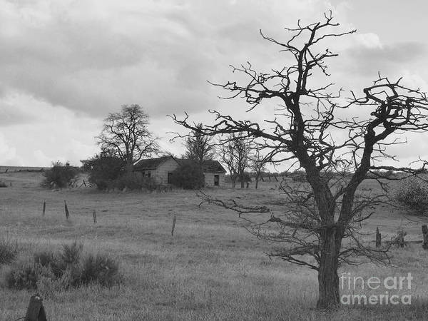 Photograph - A Ghostly Tree Guards An Abandoned House At Bluestem In Black And White by Charles Robinson