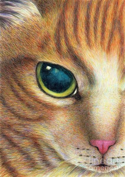 Orange Tabby Drawing - A Ginger Cat Face by Jingfen Hwu