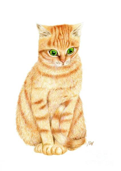 Orange Tabby Drawing - A Ginger Tabby Cat by Jingfen Hwu