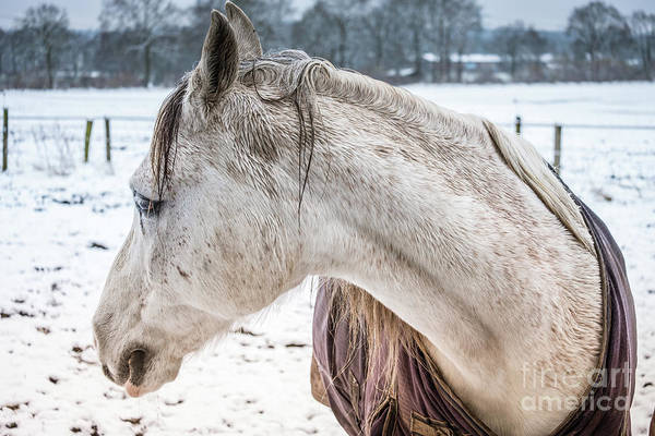 A Girlfriend Of The Horse Amigo Art Print