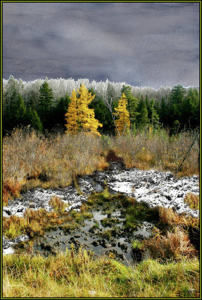 Photograph - A Golden Moment In The Larch Bog by Wayne King