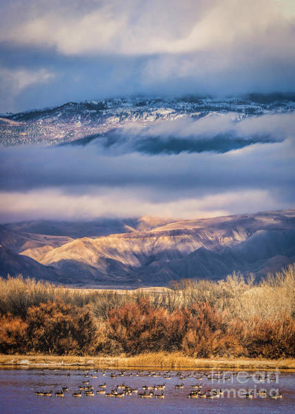 Grand Mesa National Forest Photograph - A Grand Mesa Day by Janice Pariza