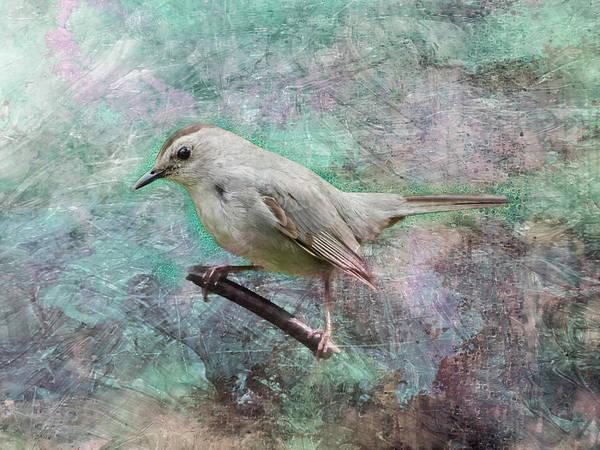 Digital Art - A Grey Catbird by Rusty R Smith