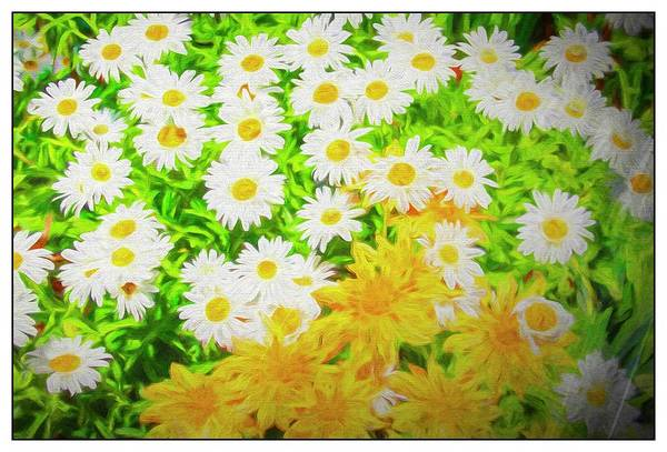 Digital Art - A  Group Of Yellow And White Daisies. by Rusty R Smith