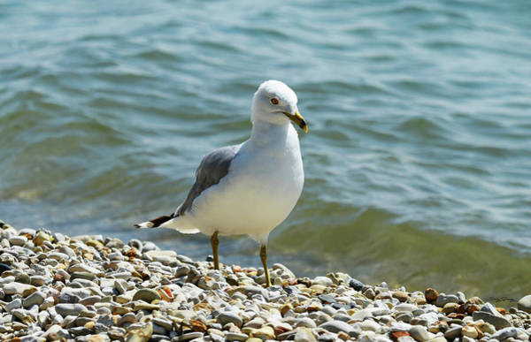 Photograph - A Handsome Fellow by Sally Sperry