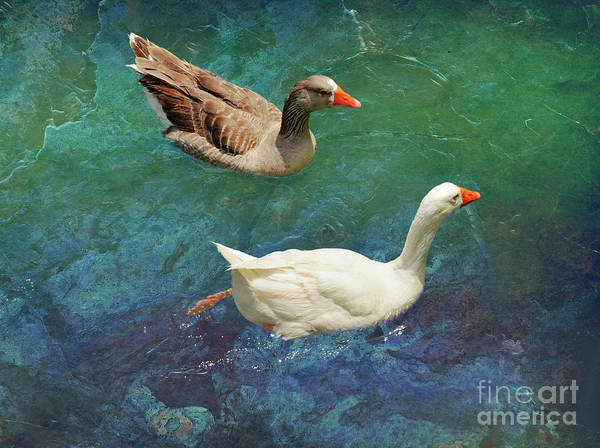 Wall Art - Photograph - A Handsome Pair by Mary Machare