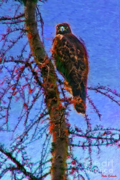 Photograph - A Hawk's Eye View by Blake Richards