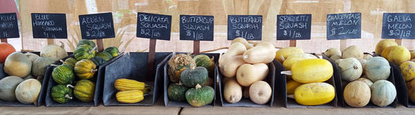 Acorn Squash Photograph - A Healthy Line Up by Karyn Robinson