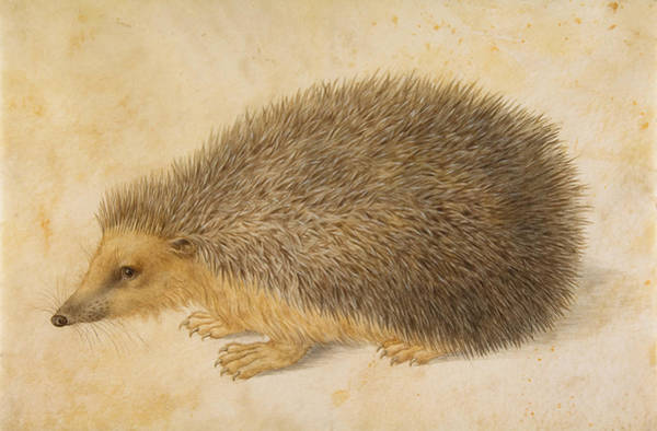 Painting - A Hedgehog by Hans Hoffmann