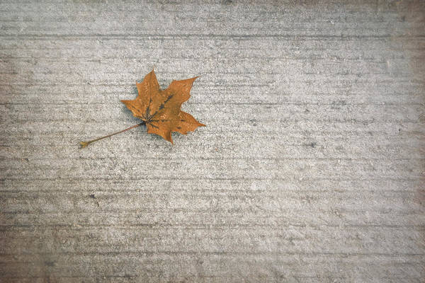 Wall Art - Photograph - A Hint Of Autumn by Scott Norris
