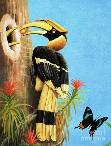 Hornbill Painting - A Hornbill by RB Davis