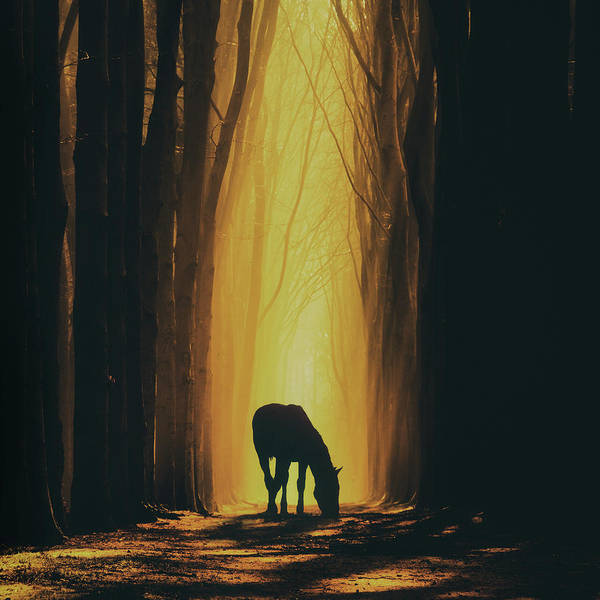 Wall Art - Photograph - A Horse Is A Horse by Martin Podt