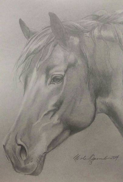Friesian Drawing - A Horse by Nicole Oquendo