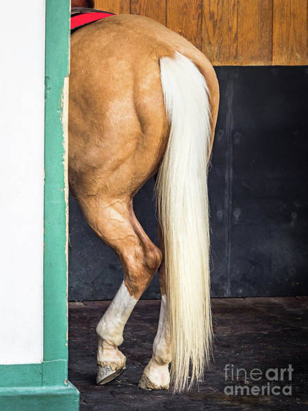 Photograph - A Horse Tale by Robin Zygelman