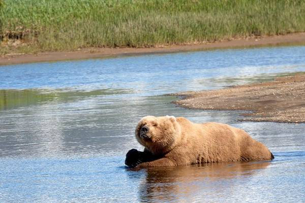 Digital Art - A Hot Day In The Hallo Bay Katmai National Park Preserve by OLena Art Brand