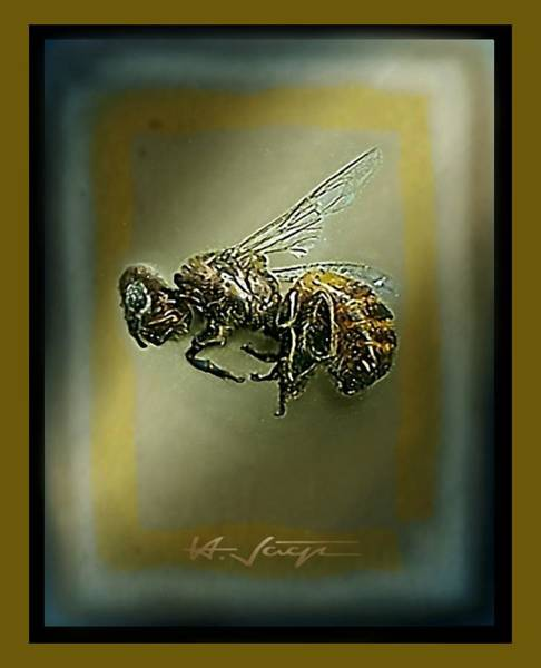 A Humble Bee Remembered Art Print