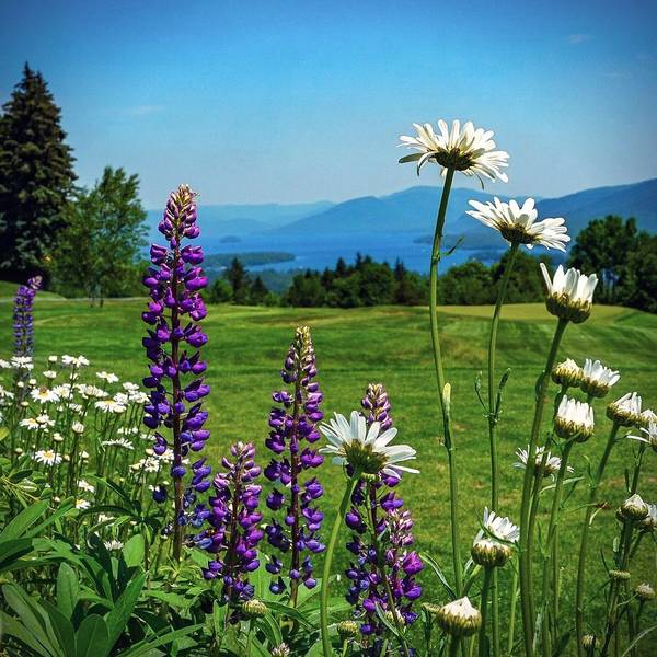 Photograph - A June Day In Heaven by Kendall McKernon