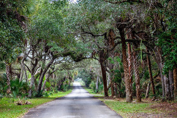 Cape Florida Photograph - A Jungle Road by W Chris Fooshee