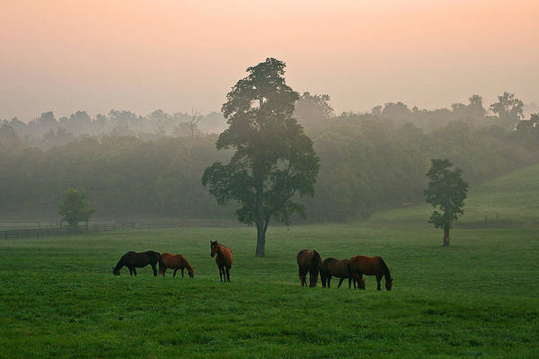 Bluegrass Photograph - A Kentucky Morning. by Ulrich Burkhalter