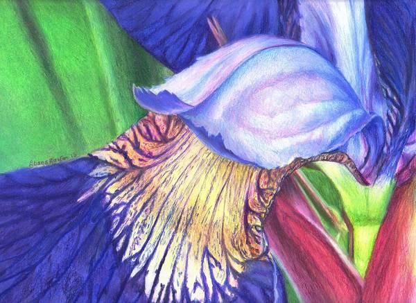 Organic Garden Drawing - A Kiss From Iris by Shana Rowe Jackson