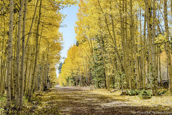 Photograph - A Lane Of Gold by Gaelyn Olmsted