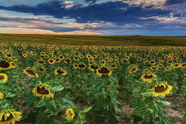 Photograph - A Lazy Summer Evening In Colorado by John De Bord