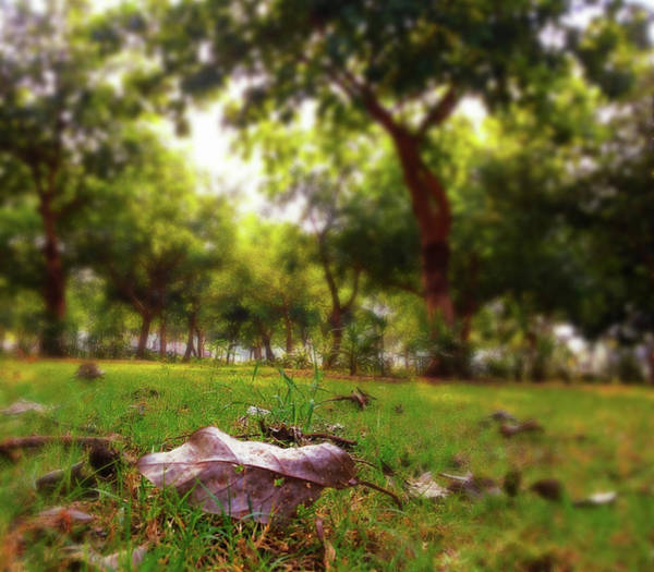 Photograph - A Leaf by Atullya N Srivastava