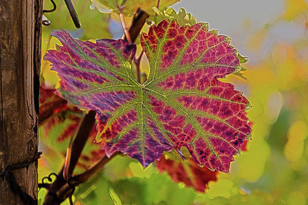 Wall Art - Photograph - A Leaf In Autumn by Rabiri Us