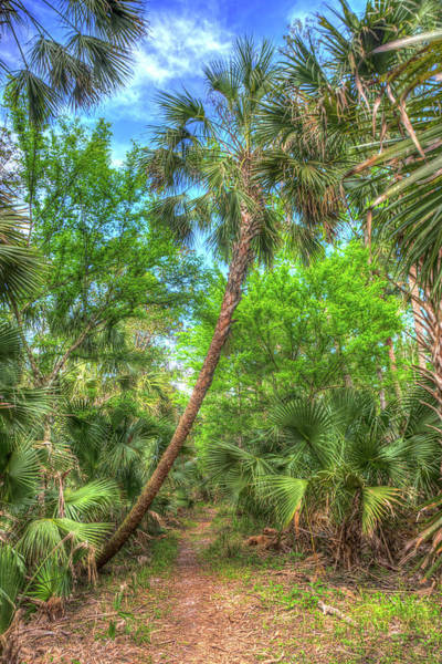 Wall Art - Photograph - A Leaning Sabal Palmetto by W Chris Fooshee