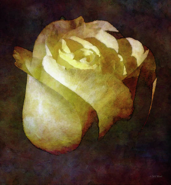 Photograph - A Light In The Dark 7791 Idp_2 by Steven Ward