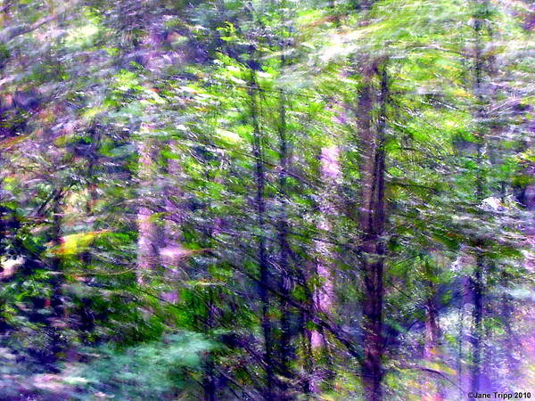 Wall Art - Photograph - A Light Spring Touch  by Jane Tripp