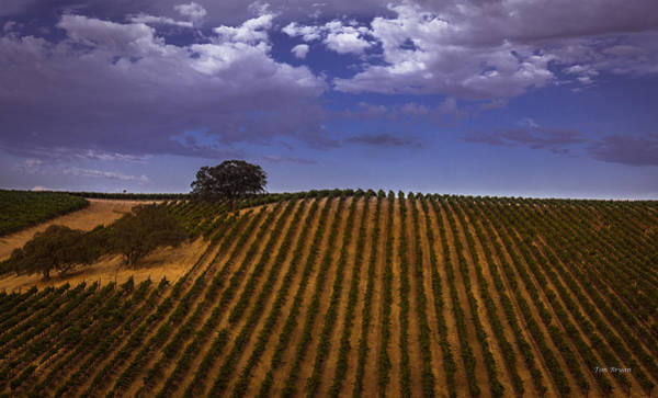 Photograph - A Line To The Sky by Tim Bryan