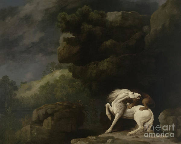 Big Fight Painting - A Lion Attacking A Horse, 1770 by George Stubbs