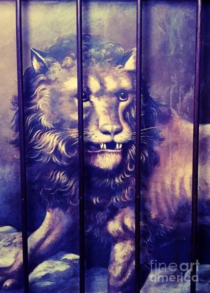 Photograph - A Lion In The Basement by Jenny Revitz Soper