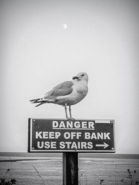 Photograph - A Little Bird Told Me by Kendall McKernon