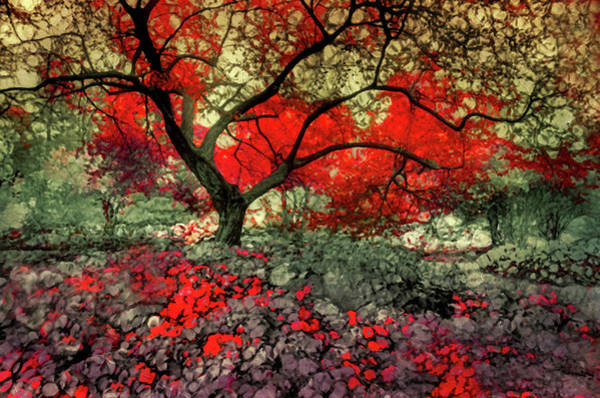 Photograph - A Little Bit Of Red by Tara Turner